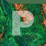 fluorescence folder pathology news image management generic product image
