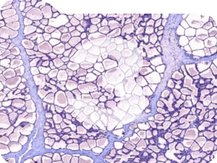 immunohistochemisry folder pathology news image management generic product image